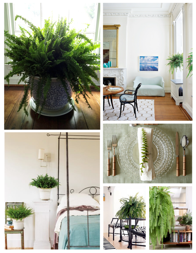 Emerald Green Delight:  Ferns Within The Interior