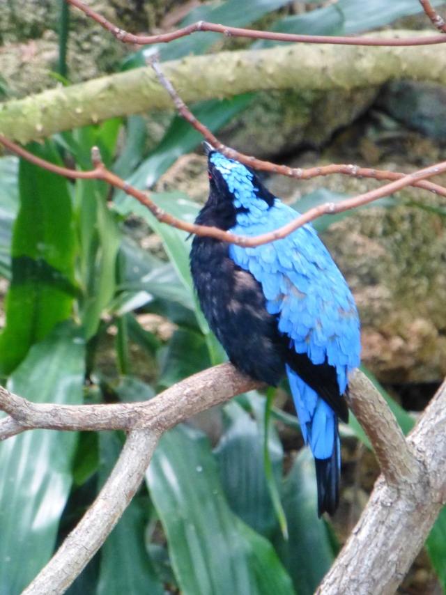 If you're looking for color, a good place to visit is the tropical room at the National Aviary.  There are so many colorful exotic species here!