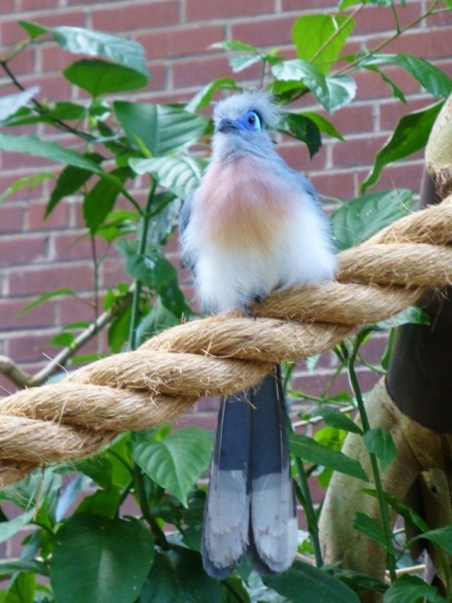 I'll leave you with two images of my own favorite bird at the Aviary.  This one has it all:  color, form, and of course texture.