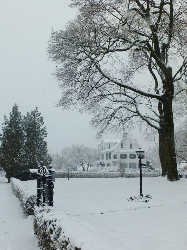 Here's another view of the white stucco house from around the corner.   One of my favorite things about my neighborhood is the tall trees.  They frame everything out beautifully! The neighbor's black iron gate and lamp-post is also pretty in the snow.