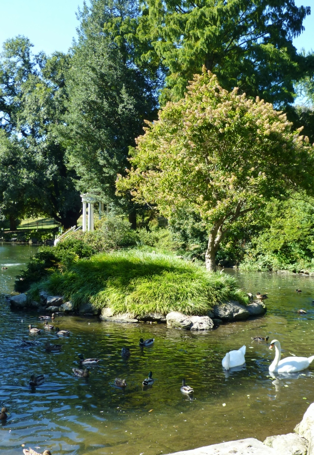 The Swan Pond at the Morris Arboretum is one of my favorite spots to visit. The graceful elegance of the swans is echoed by the Grecian Temple style pavilion. It's so elegant and peaceful here!