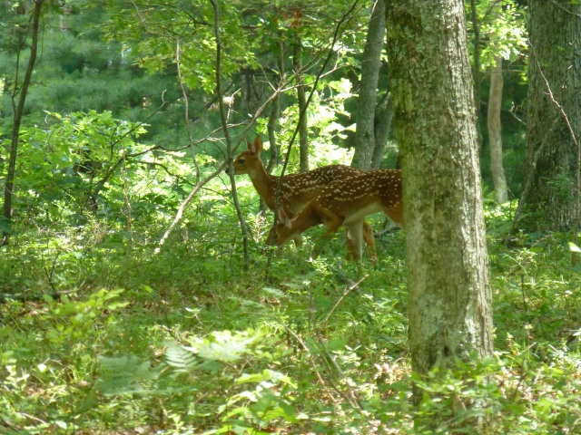 The Pocono Mountains, it's nature and wildlife, remind us of the are of West Virginia where my husband and I grew up.