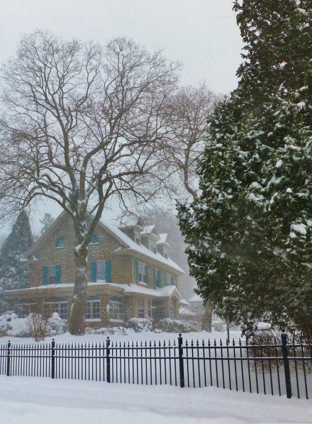 The monumental trees are one of the most beautiful elements of my neighborhood. Look at the gorgeous specimens towering over this large, lovely home!