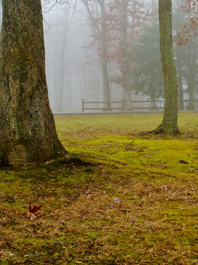 Foggy Day Moss and Trees in the Southern Poconos Jim Thorpe PA Kristine Robinsons Interiors (2)