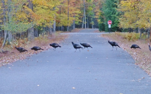 Turkey Crossing Road Jim Thorpe PA Southern Poconos Fall Kristine Robinsons Interiors (2)